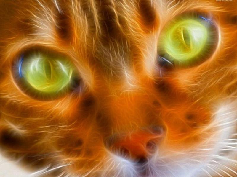 Рыжий кот с зелёными глазами обои.